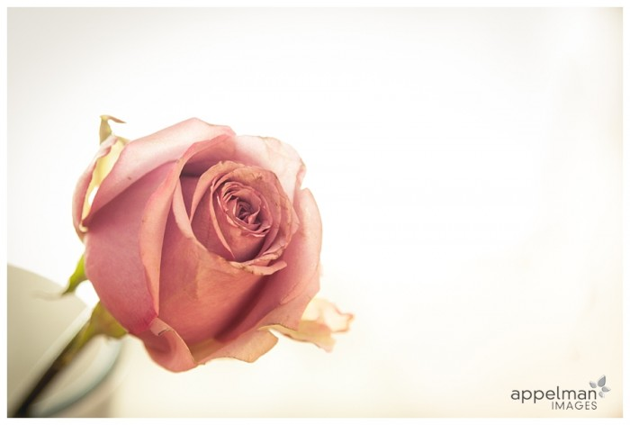 Naperville Custom Photography flower rose antique pink details picture 46-365 2014
